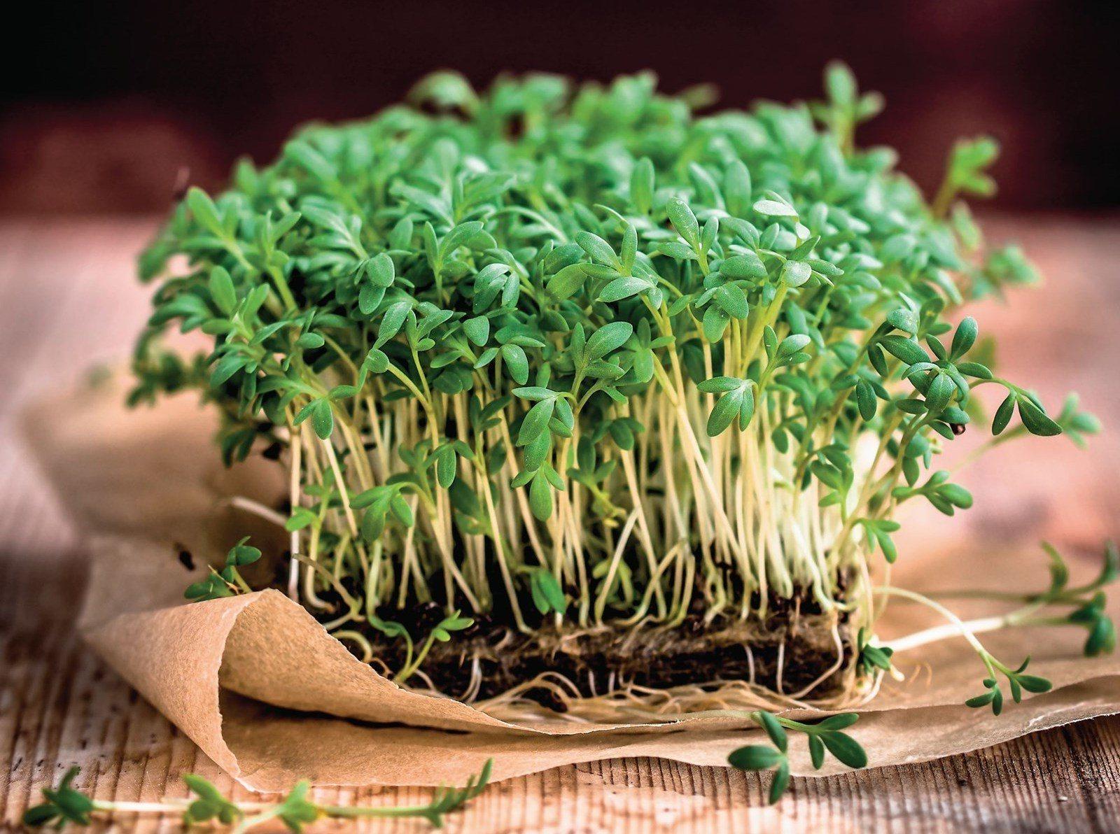 Основные правила проращивания микрозелени