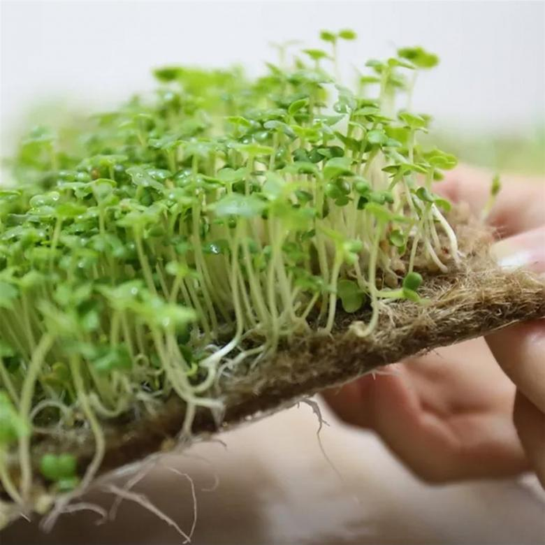 Что такое коврик для выращивания микрозелени