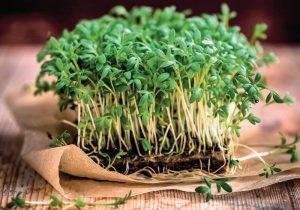 Что такое микрозелень, польза и применение